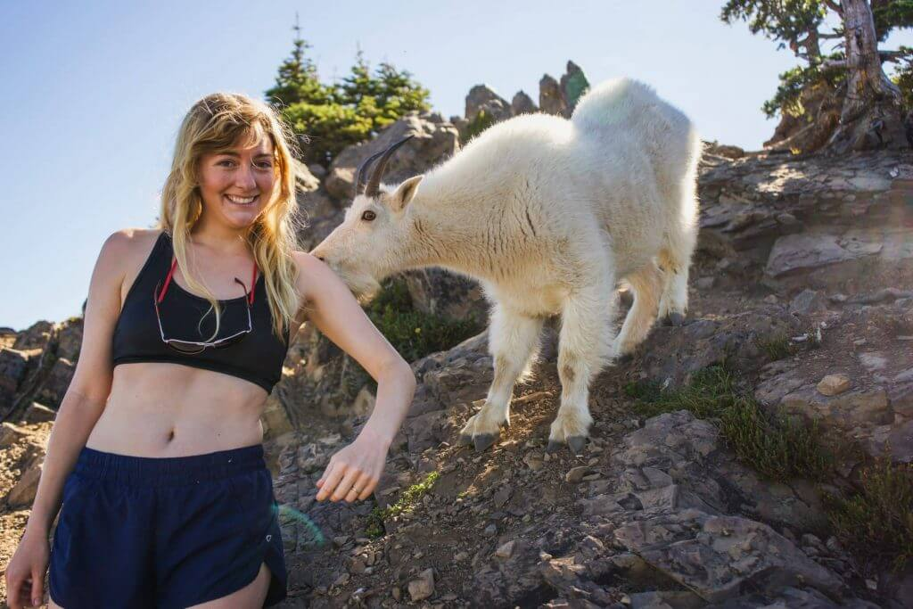 Kim gets licked by a mountain goat on Mount Ellinor