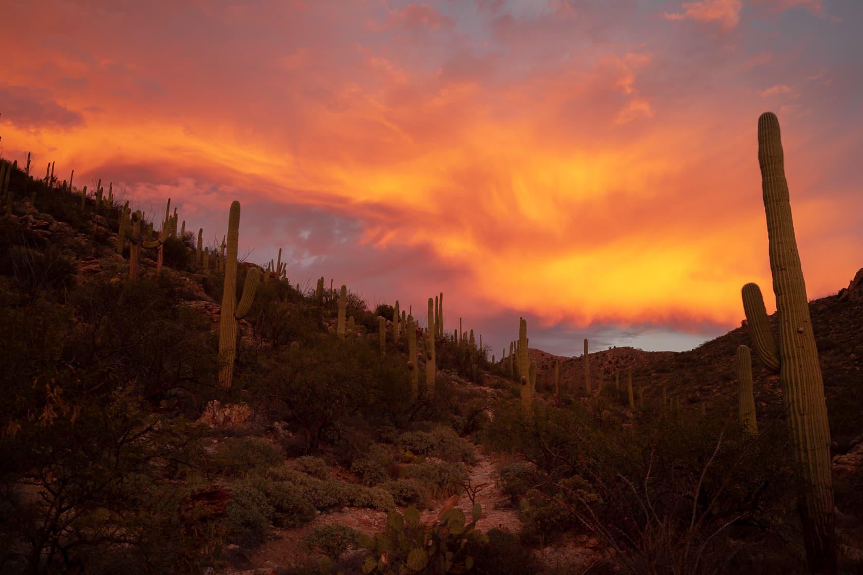 Sunset on Agua Caliente Hill